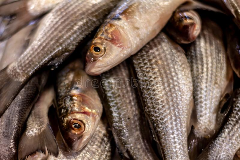 ?wie?e ryby rynku Podejście skale i skóra ryba od morza Proteiny od morza zdjęcia stock