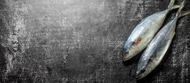 ?wie?e ryby stark fotografia royalty free
