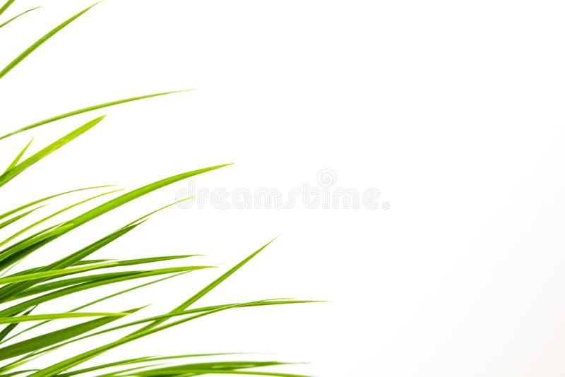 ?wie?e trawa zieleni zdjęcie royalty free