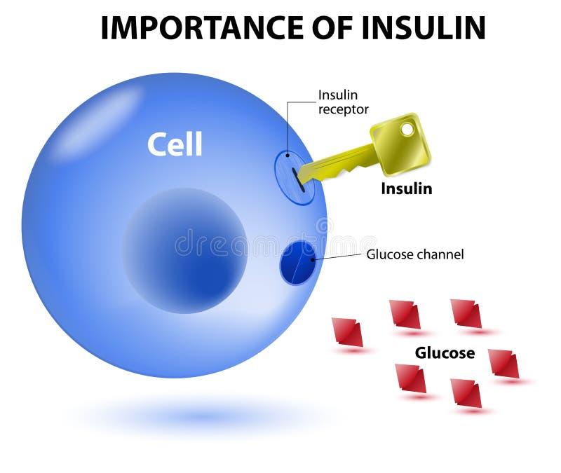 Wie Insulinarbeit erledigt lizenzfreie abbildung