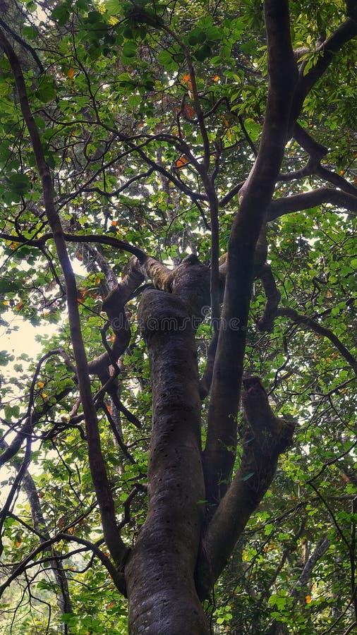 Wie tarzan Baum lizenzfreies stockbild