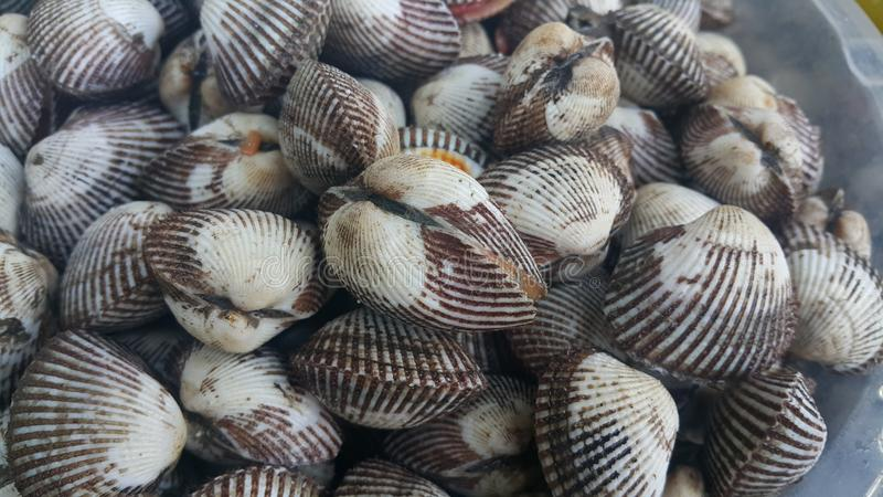 ?wie?y surowy denny cockles t?o, morze ?uska, ulubiony naczynie owoce morza obrazy royalty free