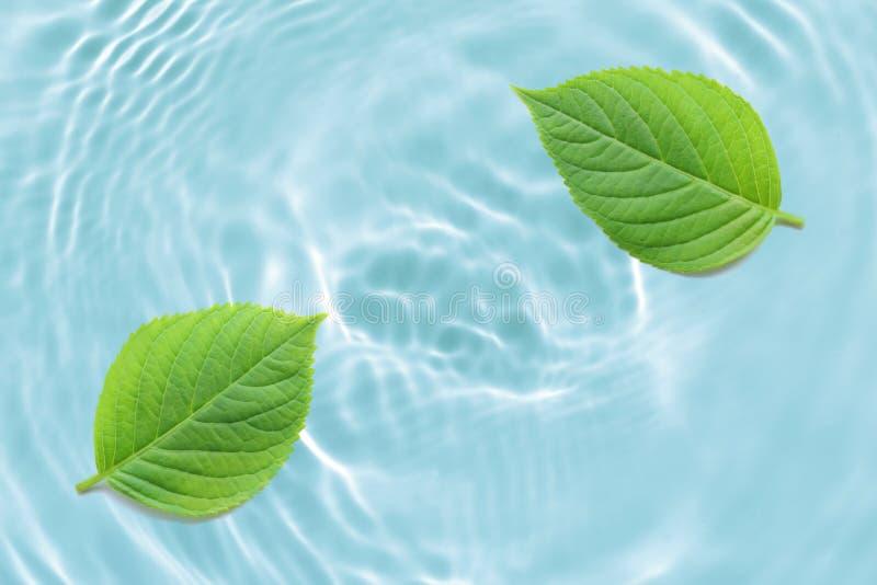 ?wie?y zielony li?cia abstrakt na pluskocz?cym b??kitne wody tekstury tle ilustracja wektor