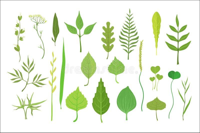 ?wie?a ziele? opuszcza od drzew, krzak?w i trawy ustawiaj?cych dla etykietka projekta, Natura i ekologia, kresk?wka wyszczeg?lnia royalty ilustracja