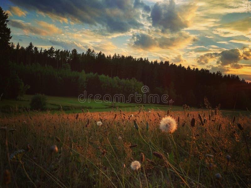 Wieczór łąka pod chmurami /1 fotografia royalty free