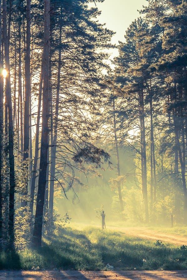 Wieczór las z słońcem i światłem zdjęcie royalty free
