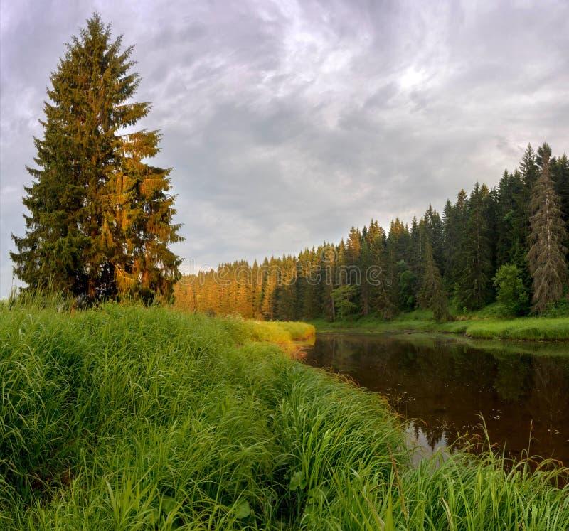 Wieczór na lasowej rzece zdjęcie stock
