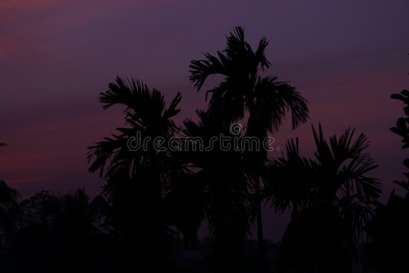 wieczór nieb nieba tekstura zdjęcie royalty free