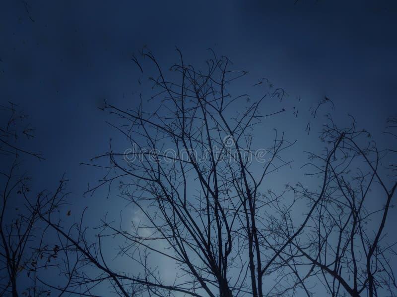 Wieczór nieba drzewo obrazy royalty free