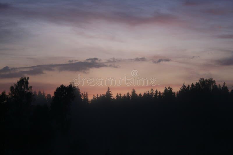 Wieczór nieba z lasową linią horyzontu zdjęcie stock