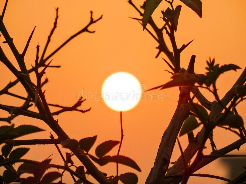 Wieczór słońca kwiat zdjęcie stock