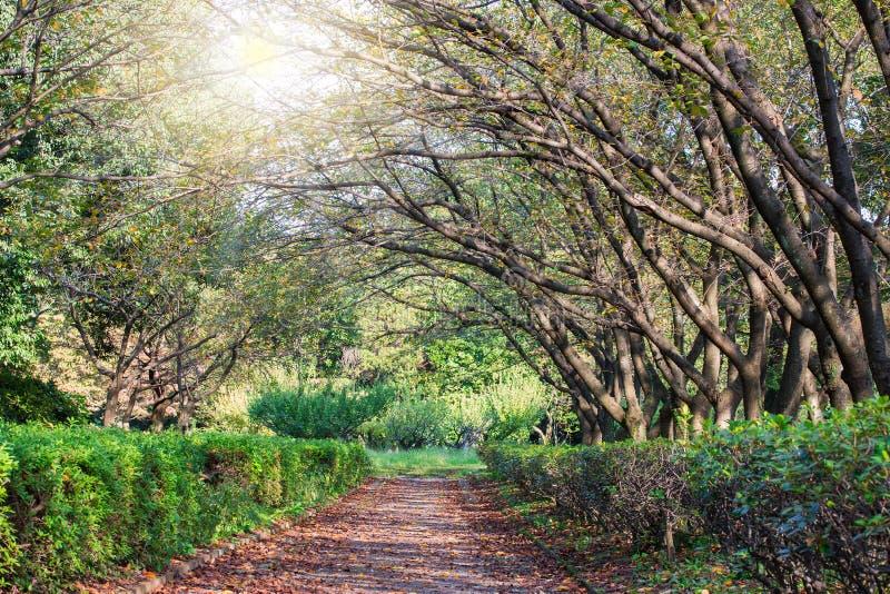 Wieczór słońce i potężni przesłodzeni zieleni drzewa fotografia stock
