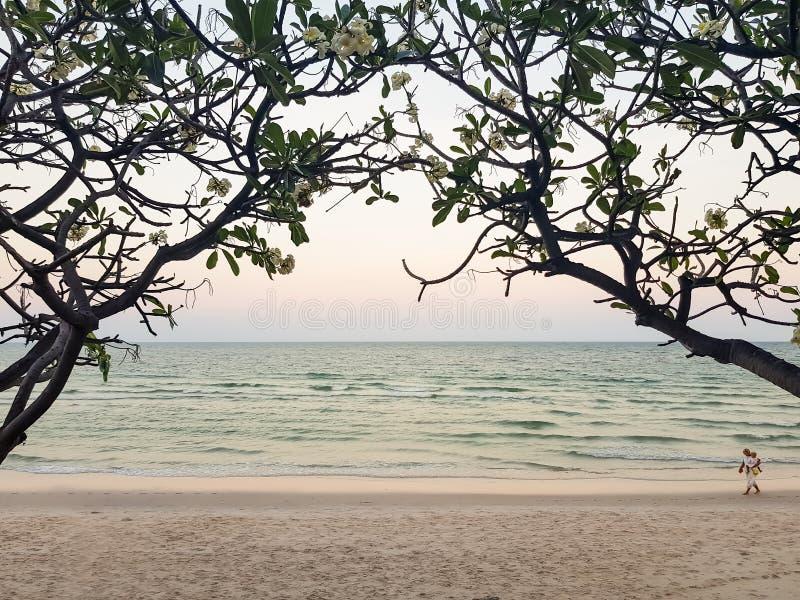 Wieczór zmierzchu pastelowy seaview i biała piaskowata plaża przez pięknego kwiatu sylwetki Frangipani lub Plumeria drzewa łuk fotografia royalty free