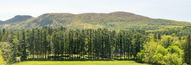 Wiecznozieloni drzewa i Berkshire wzgórza fotografia royalty free