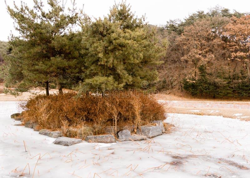 Wiecznozieloni drzewa na mężczyzna zrobili wyspie obrazy stock