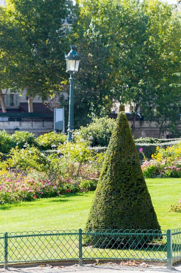 Wiecznozieloni przycinający szyszkowi europejczyka pudełka drzewa krzaki fotografia stock