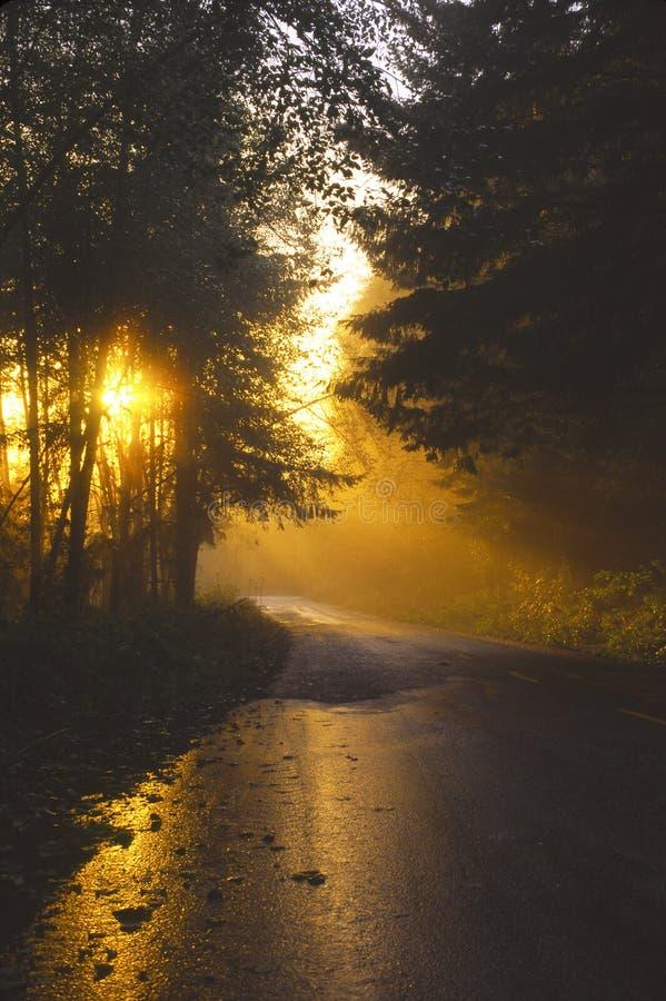 wieczorem lasów redwood światła zdjęcia stock