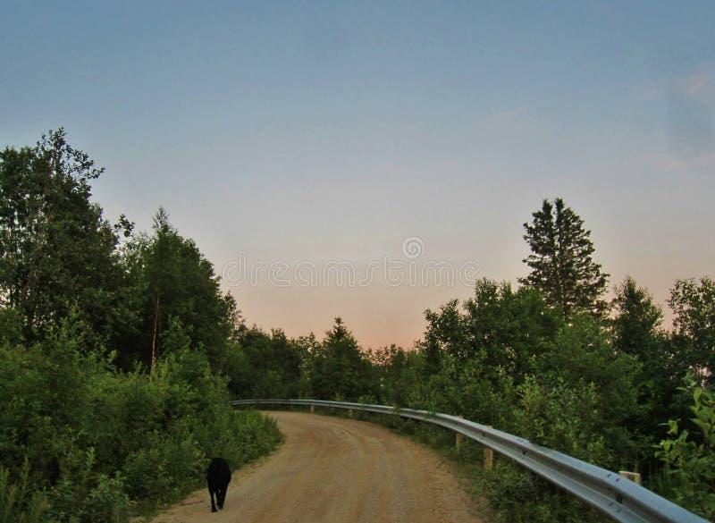 wieczorem na spacer zdjęcie royalty free