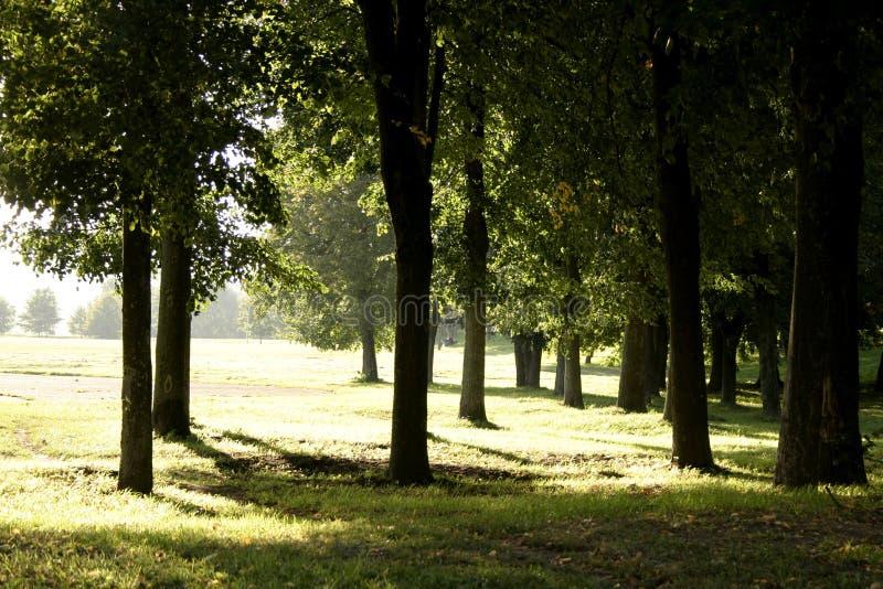 Wieczorem Park Ciepłego Ii Fotografia Stock