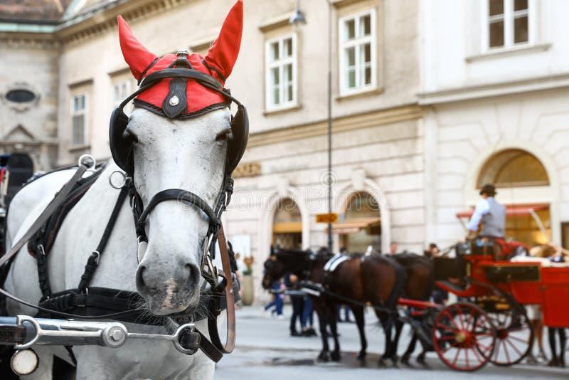 WIEDEŃ AUSTRIA, KWIECIEŃ, - 26, 2019: Koń w karecianej nicielnicie na mieście fotografia royalty free