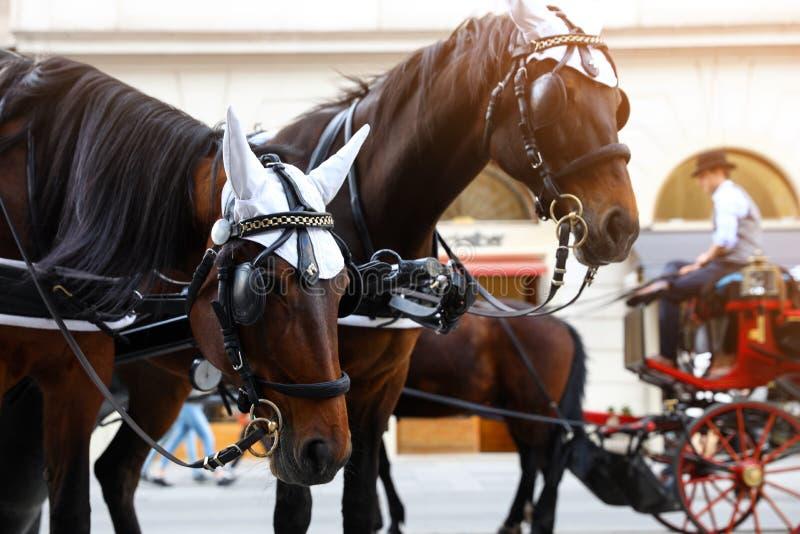 WIEDEŃ AUSTRIA, KWIECIEŃ, - 26, 2019: Konie w karecianej nicielnicie na mieście fotografia stock
