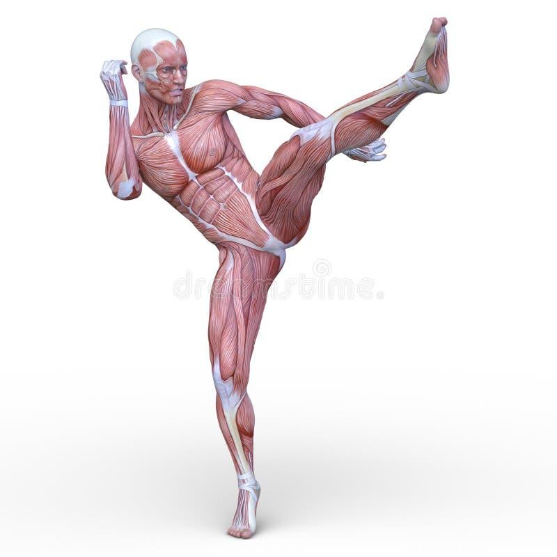 Wiedergabe 3D CG des Muskelmannes lizenzfreie abbildung