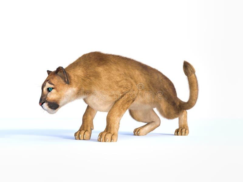 Wiedergabe 3d des frequentierenden Pumas auf weißem Hintergrund lizenzfreie abbildung