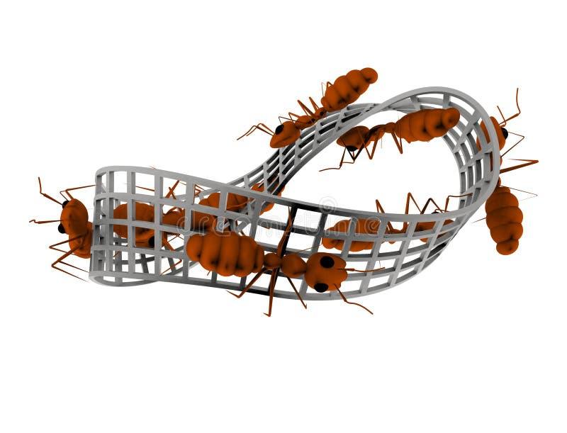 Wiedergabe 3d von den Ameisen, die auf eine Unendlichkeitszahl lokalisiert im weißen Hintergrund gehen lizenzfreie abbildung