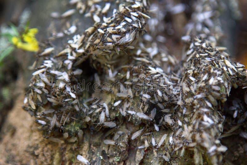 Wiedergabe von Ameisen lizenzfreie stockfotos