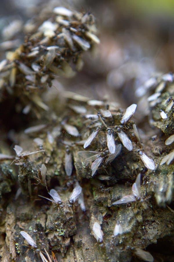Wiedergabe von Ameisen lizenzfreies stockbild