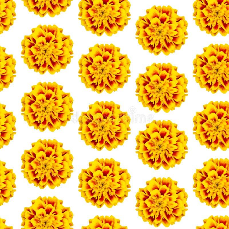 Wiederholen des nahtlosen Musters gelben Blumen tagetes patula stockfoto
