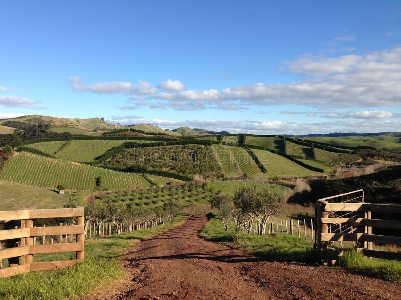 Wiejscy zieleni toczni wzgórza w wsi zdjęcie royalty free