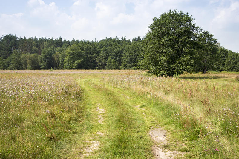 Wiejska Droga krajobraz zdjęcia royalty free