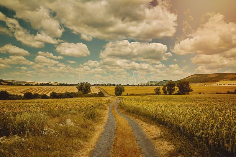 Wiejska droga między polami obraz stock
