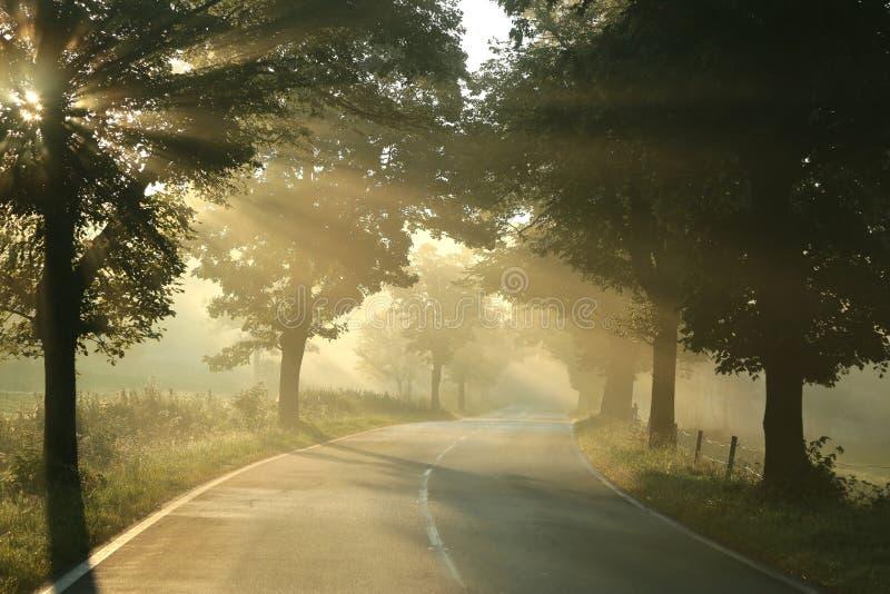 Wiejska droga na mgłowym jesień ranku obraz stock