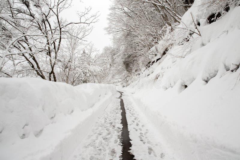 Wiejska droga prowadzi wśród frosted drzew w shirakawago, Takayam obrazy stock
