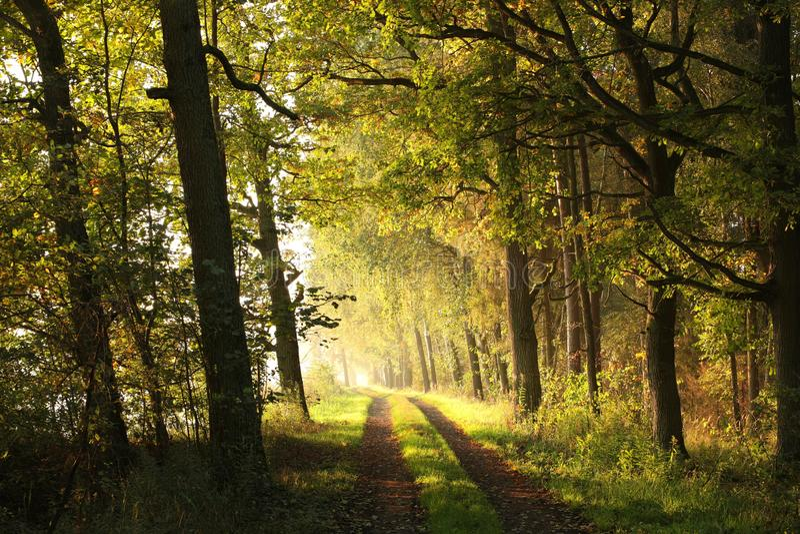 Wiejska droga przez jesień lasu przy wschód słońca zdjęcie stock