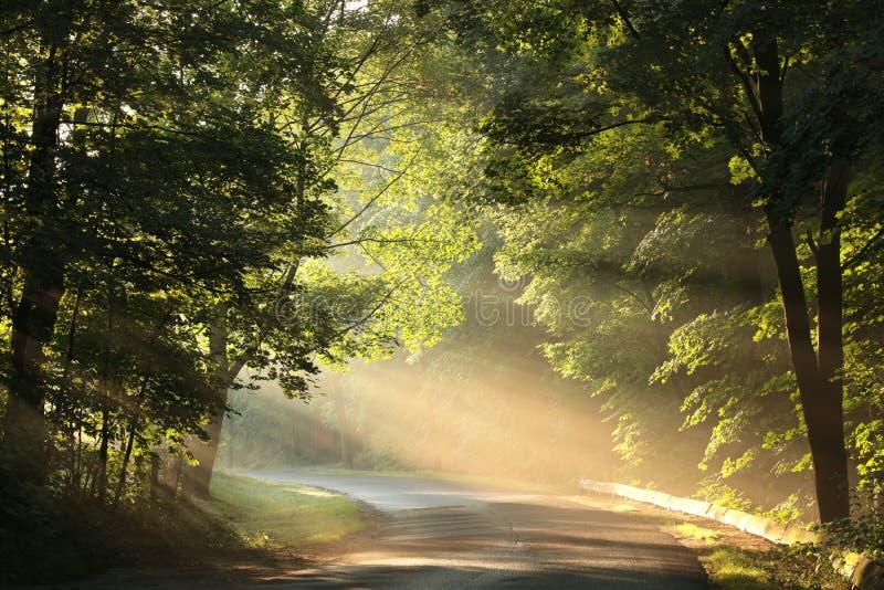 Wiejska droga przez mglistego lasu przy wschód słońca obrazy stock
