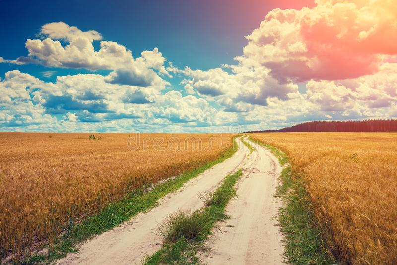 Wiejska droga przez pola zdjęcie stock