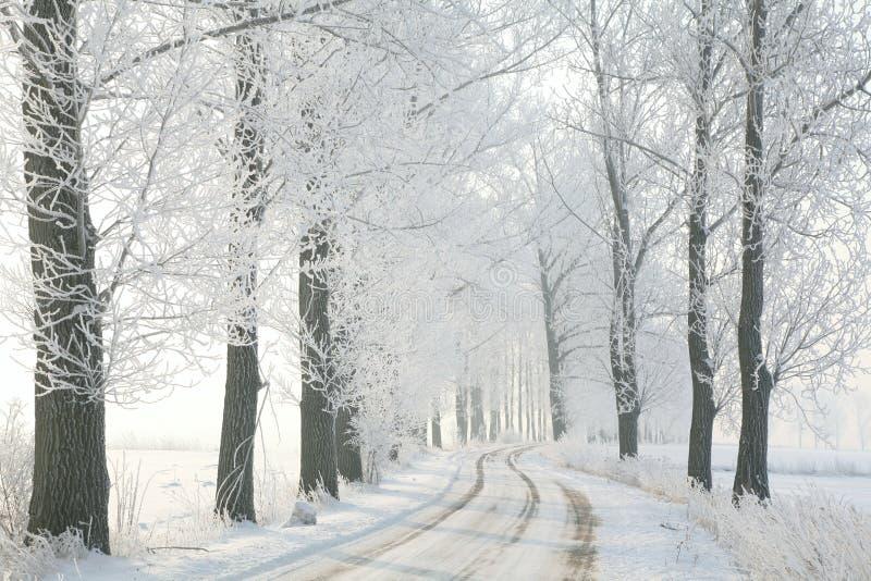 Wiejska droga wśród drzew w zimy scenerii zdjęcia stock