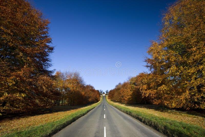 Wiejska droga w Jesień - Anglia fotografia royalty free