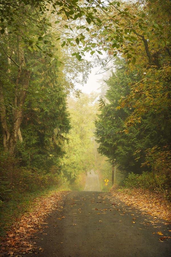 Wiejska Droga w Jesiennych kolorach obrazy stock