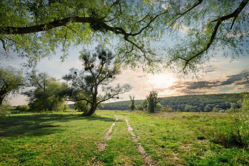 Wiejska droga w lato lesie obraz royalty free