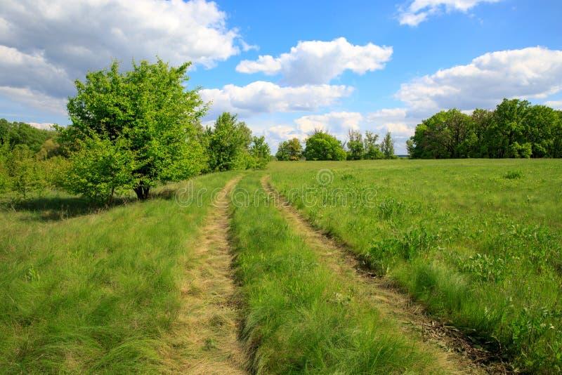 Wiejska droga w stepie wśród zielonej trawy zdjęcie stock