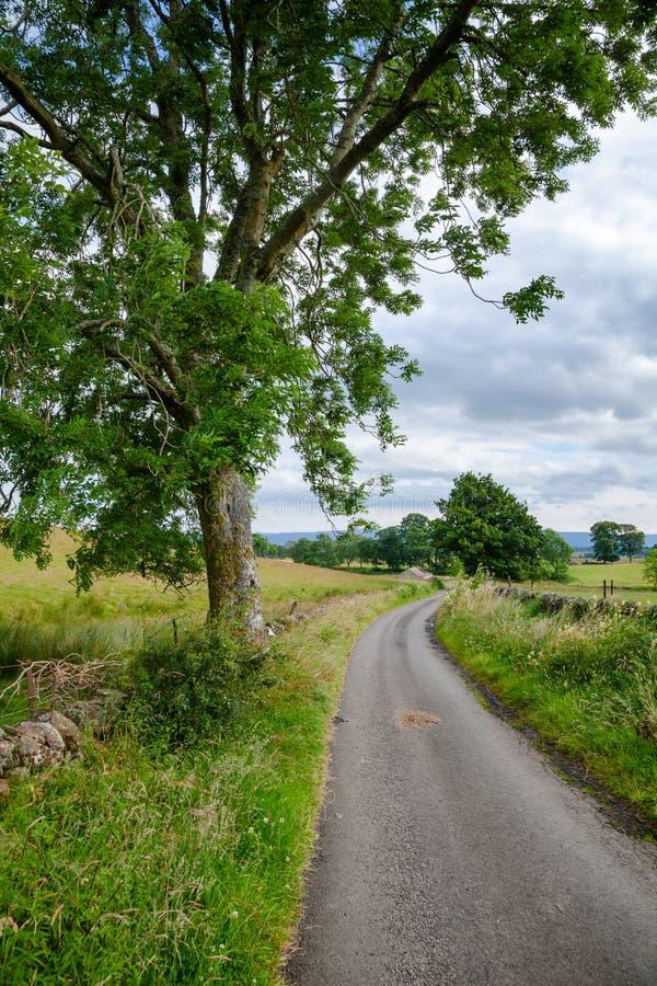 Wiejska droga wzdłuż drystane tamy w wiejskim Szkocja UK obraz stock