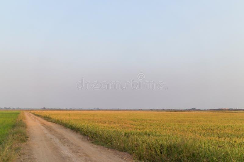 Wiejska droga wzdłuż zielonego ryżu gospodarstwa rolnego zdjęcie royalty free