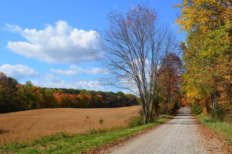 Wiejska droga & złoty pole na pogodnym jesień dniu fotografia royalty free