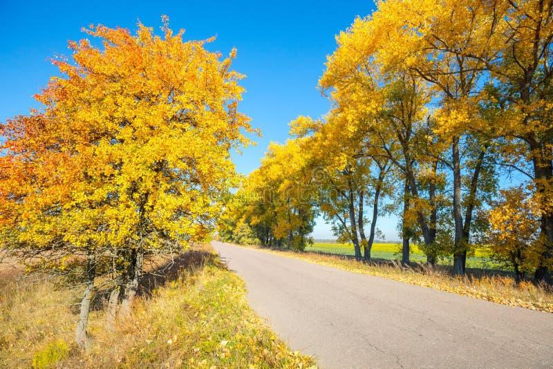 Wiejska droga z żółtymi drzewami na poboczach obraz stock