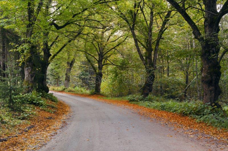 Wiejska drogowa pobliska wioska Karli, Latvia fotografia royalty free