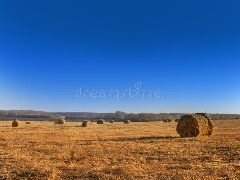 Wiejska krajobrazu pola łąka Z siano belami Po żniwa W Pogodnym wieczór Przy zmierzchem Lub wschodu słońca W późnym lecie obraz stock